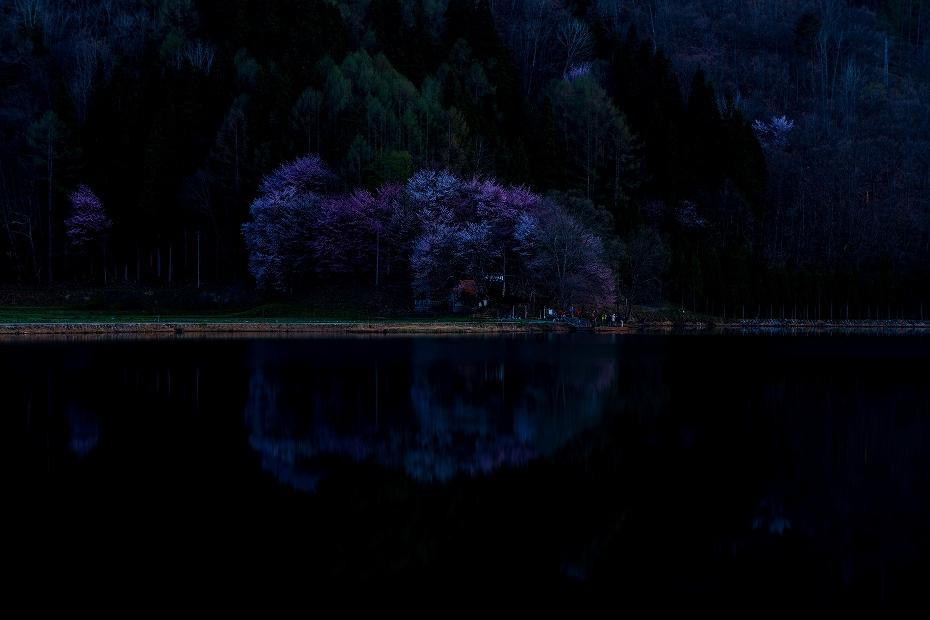 2017.05.04中綱湖のオオヤマザクラ5