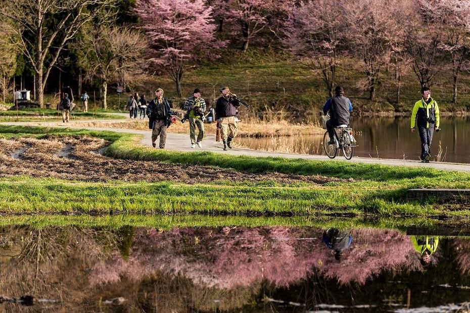 2017.05.03中綱湖のオオヤマザクラ4