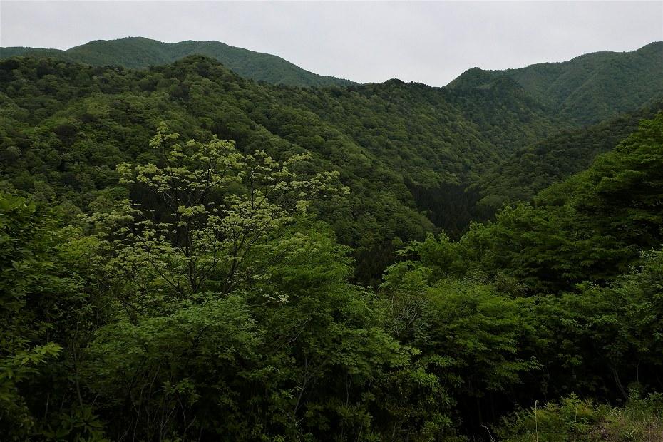2017.05.09富士写ケ岳シャクナゲ36