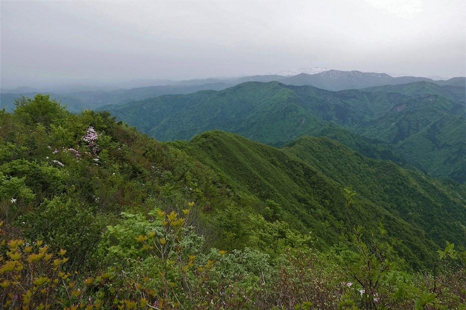 2017.05.09富士写ケ岳シャクナゲ24