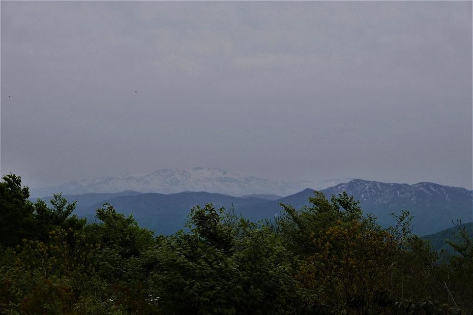 2017.05.09富士写ケ岳シャクナゲ12