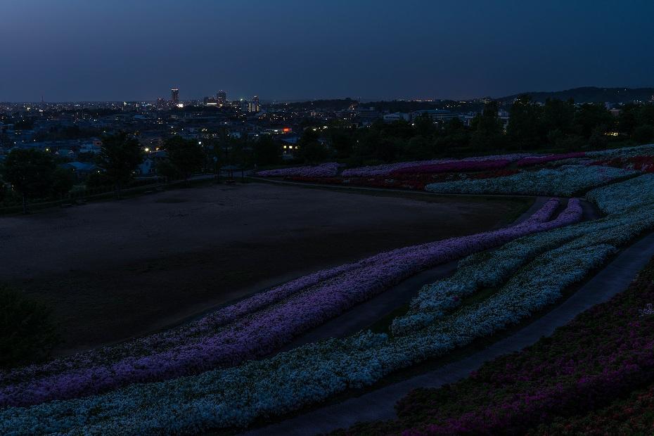 2017.05.07大乗寺丘陵公園のつつじ10