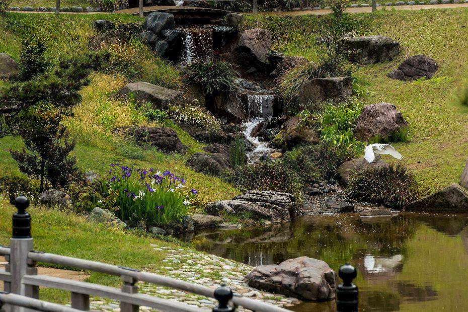 2017.05.14春の金沢城公園5