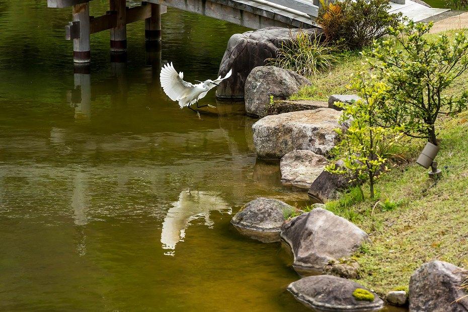 2017.05.14春の金沢城公園2