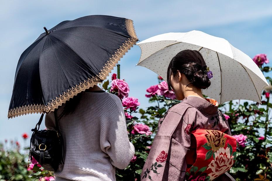 2017.05.17富樫のバラ園9