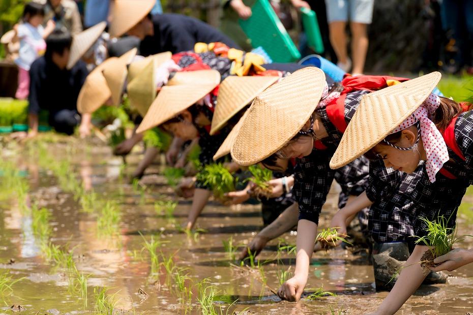 2017.05.29白川郷の田植え祭り32