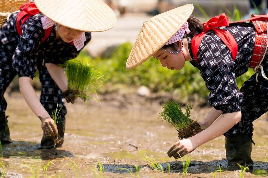 2017.05.29白川郷の田植え祭り31