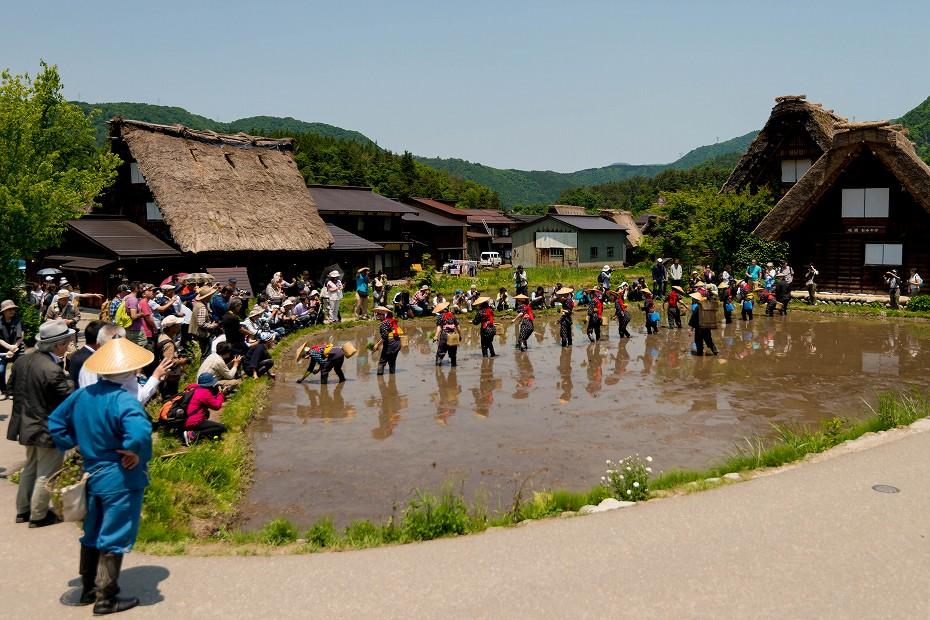 2017.05.29白川郷の田植え祭り28