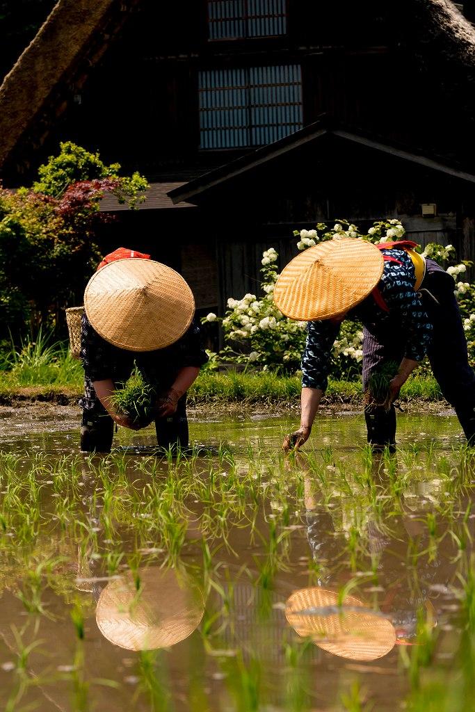 2017.05.29白川郷の田植え祭り19