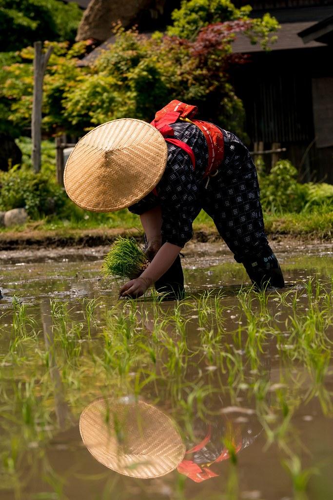 2017.05.29白川郷の田植え祭り18