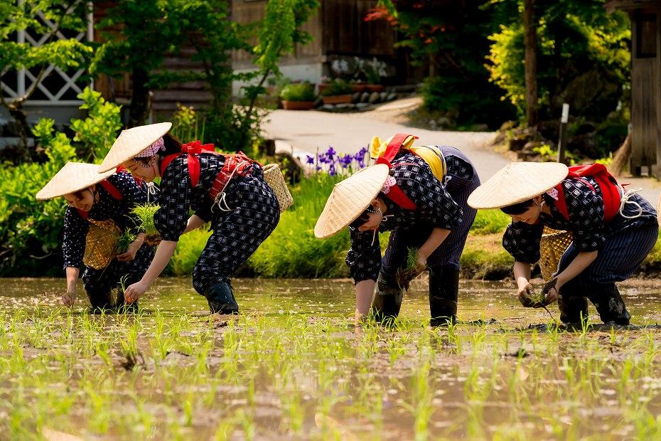 2017.05.29白川郷の田植え祭り17