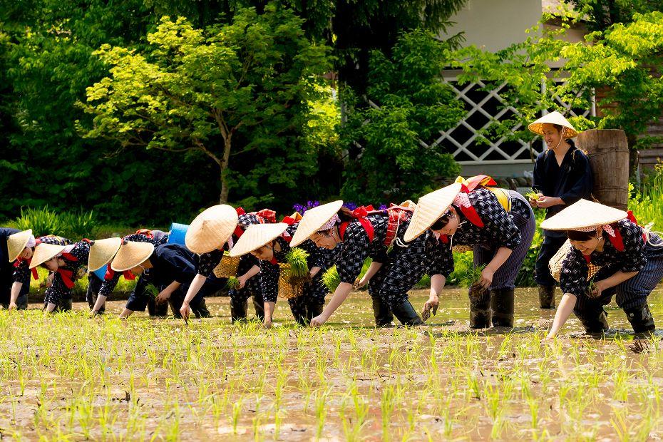 2017.05.29白川郷の田植え祭り13