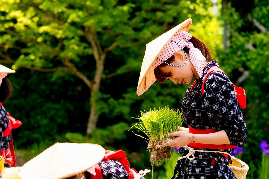 2017.05.29白川郷の田植え祭り12