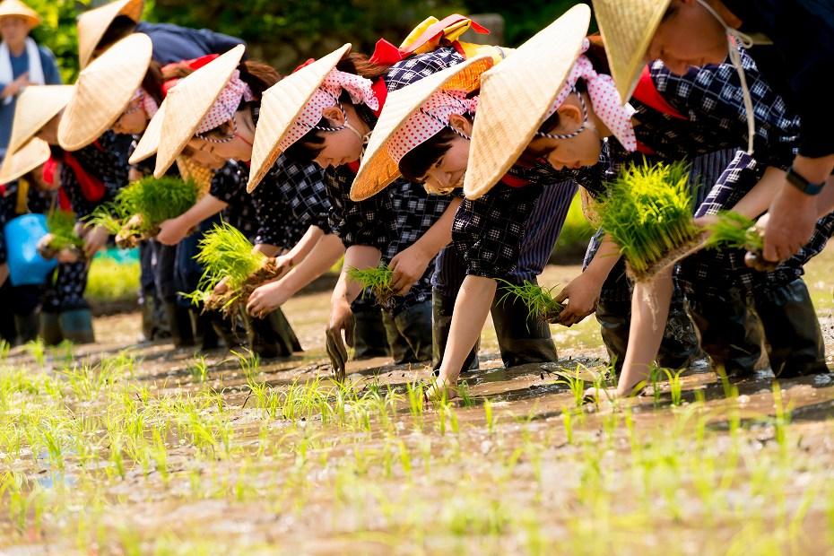 2017.05.29白川郷の田植え祭り6