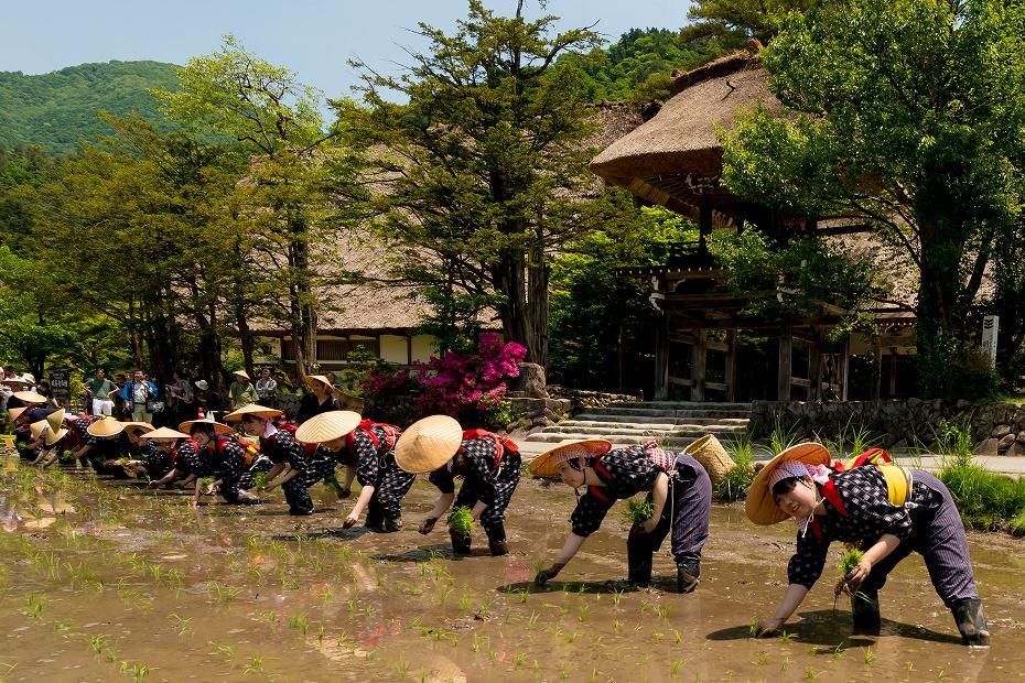 2017.05.29白川郷の田植え祭り1