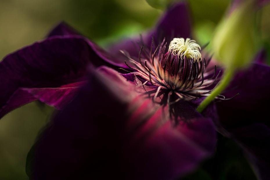 2017.06.01オープンガーデンの花々16