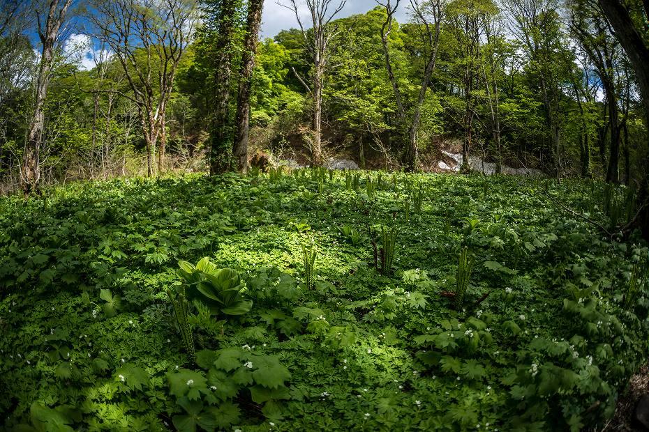 2017.06.04籾糠山と天生高層湿原32