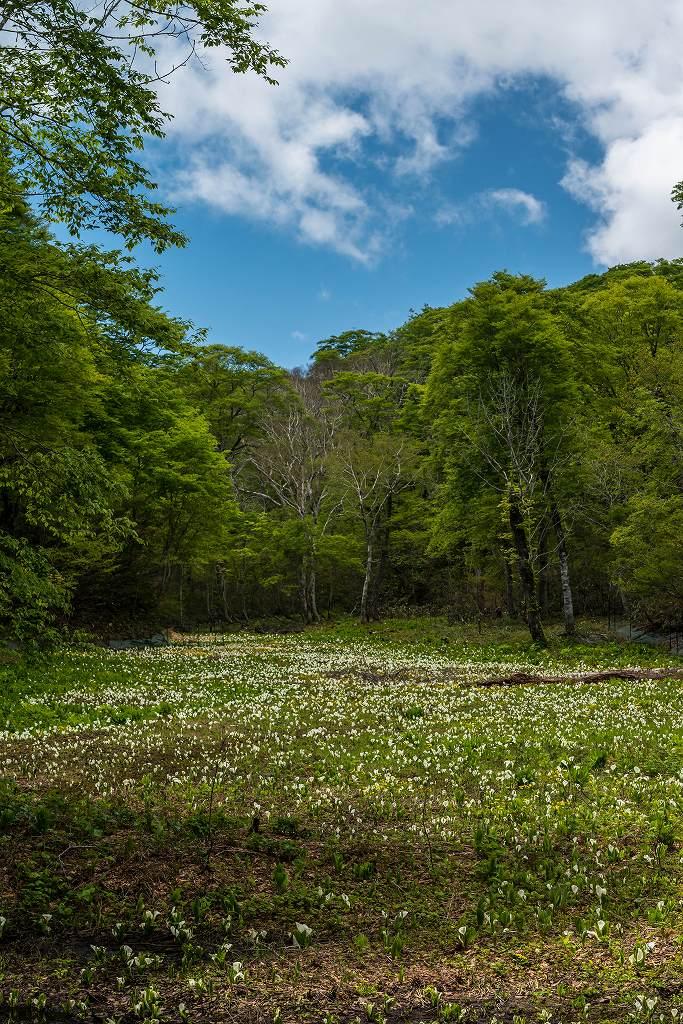 2017.06.04籾糠山と天生高層湿原28