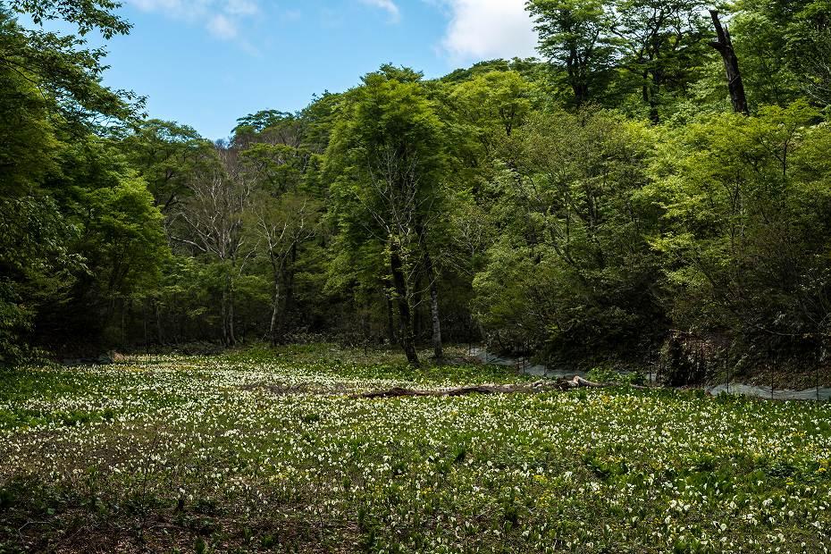 2017.06.04籾糠山と天生高層湿原27