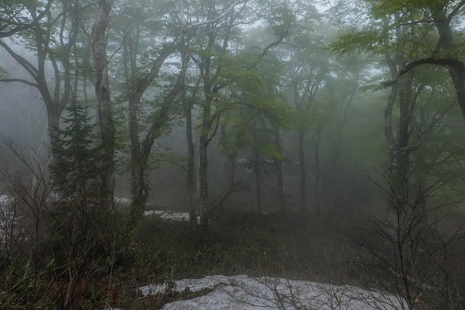 2017.06.04籾糠山と天生高層湿原10