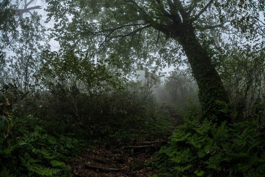 2017.06.04籾糠山と天生高層湿原12