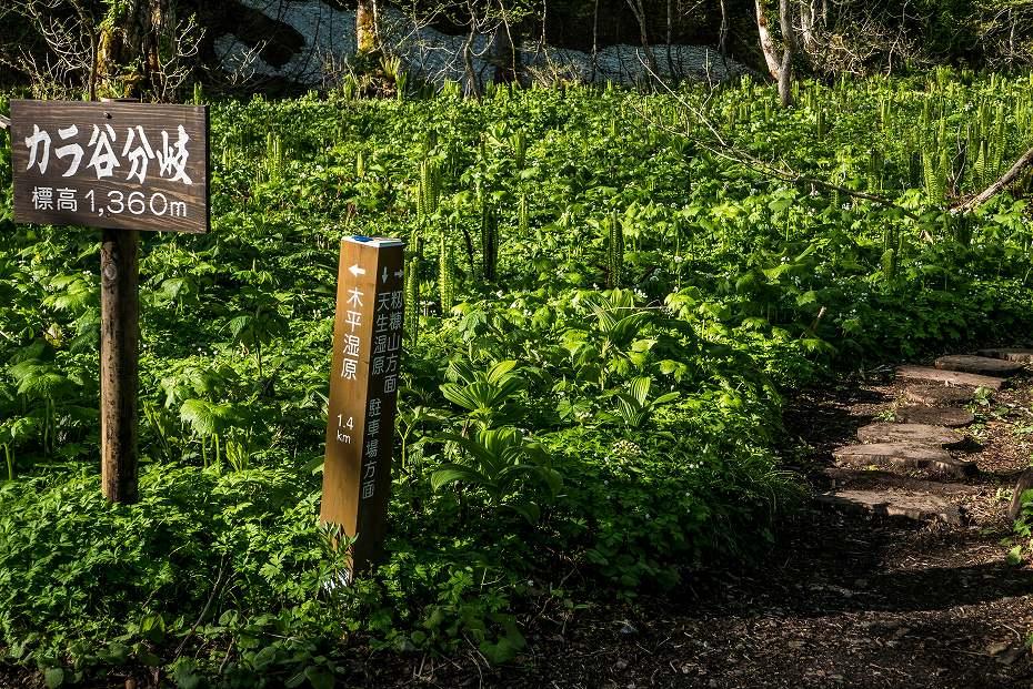 2017.06.04籾糠山と天生高層湿原2