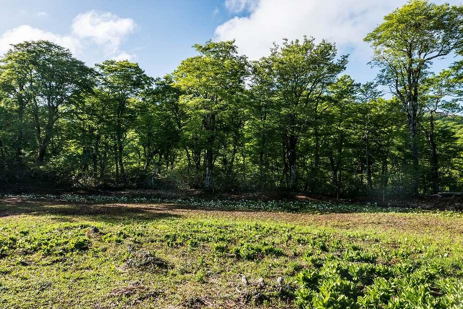 2017.06.04籾糠山と天生高層湿原1