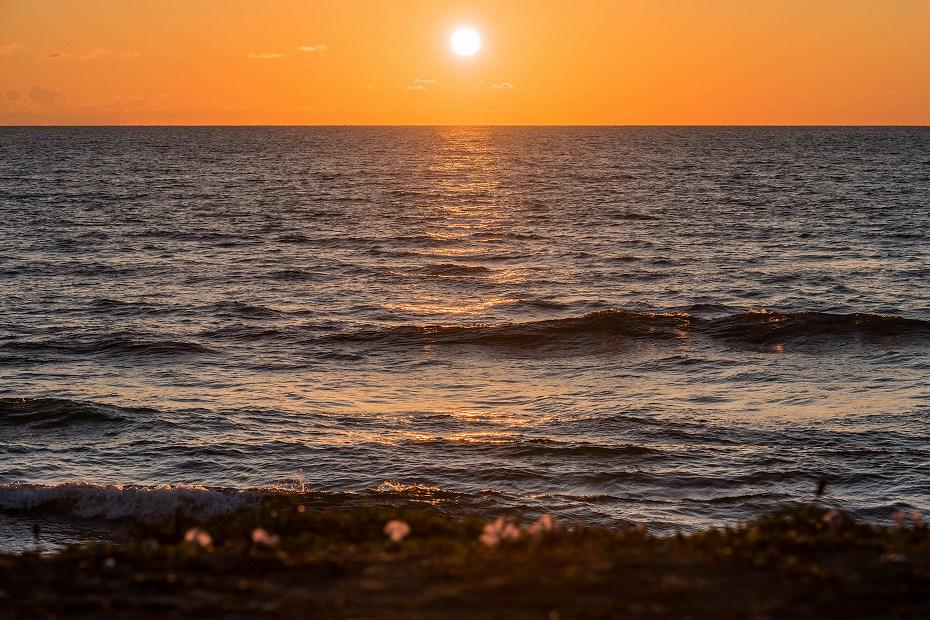 2017.06.05内灘海岸8ハマヒルガオ
