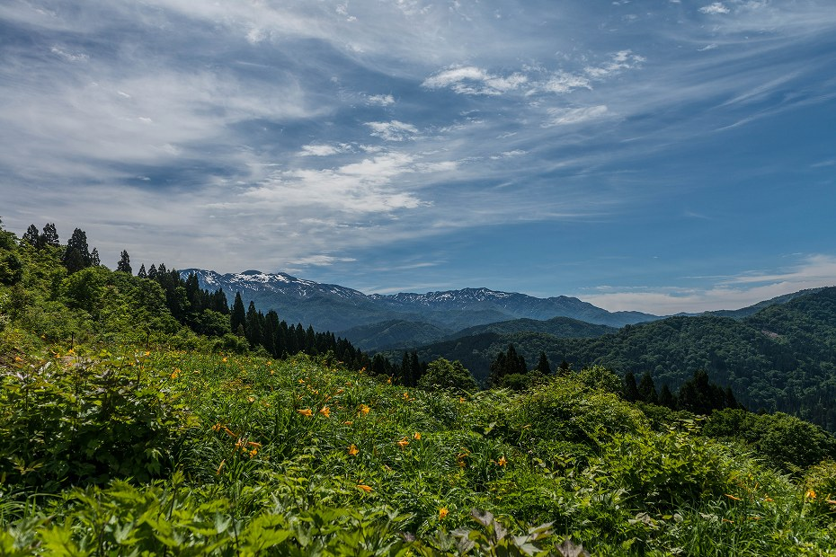 2017.06.11白山高山植物園1