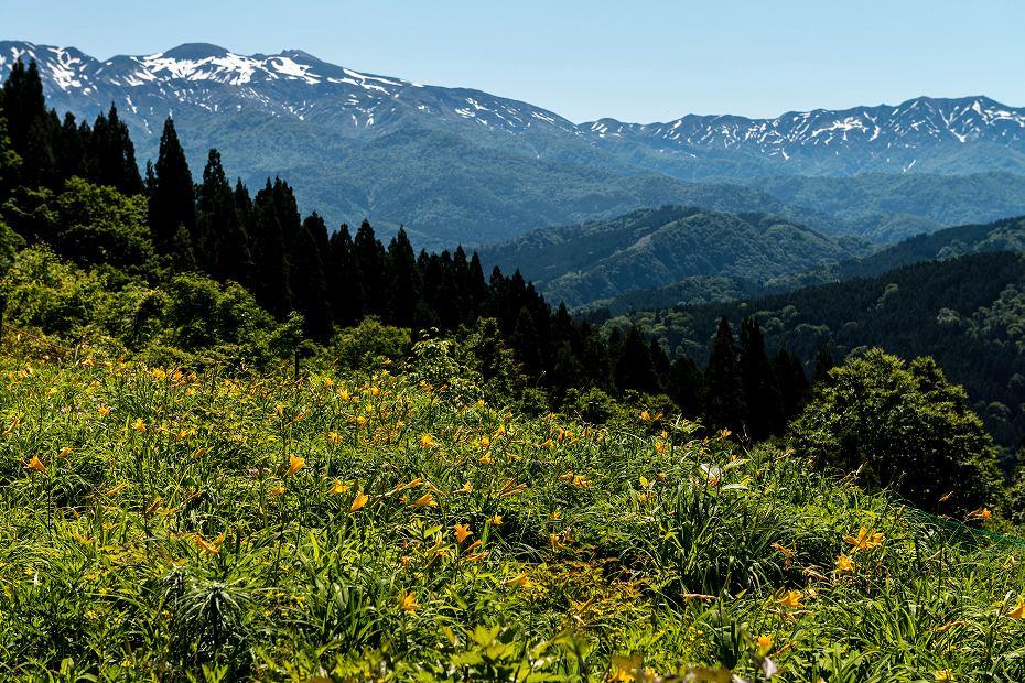2017.06.17白山高山植物園2