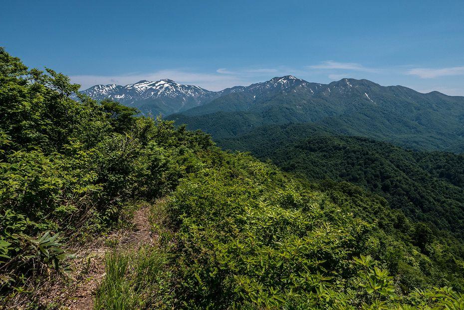 2017.06.19三ツ谷から赤兎山、杉峠34