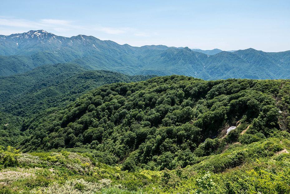 2017.06.19三ツ谷から赤兎山、杉峠31