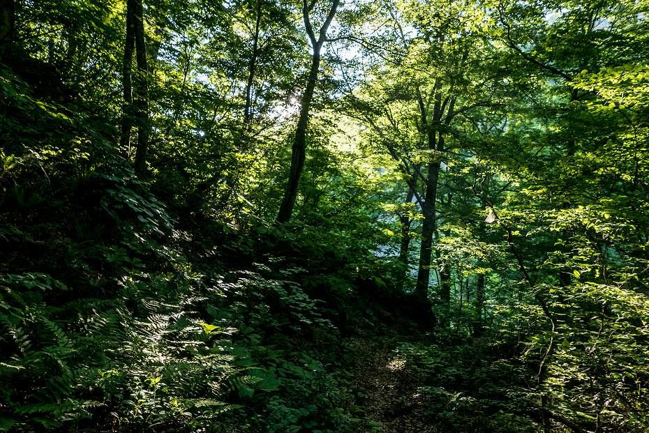 2017.06.19三ツ谷から赤兎山、杉峠5