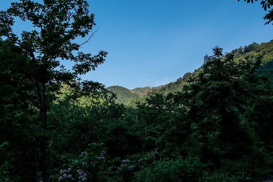 2017.06.19三ツ谷から赤兎山、杉峠1
