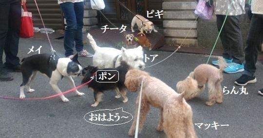 早朝集会に合流(7匹)