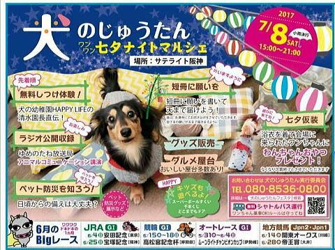 犬のじゅうたん七夕2017-1