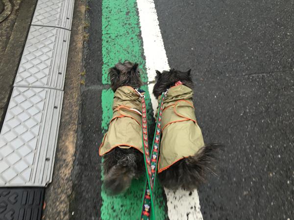 03雨散歩
