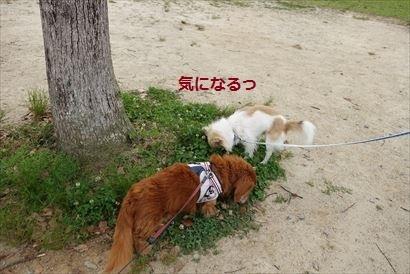 DSC09329_R.jpg