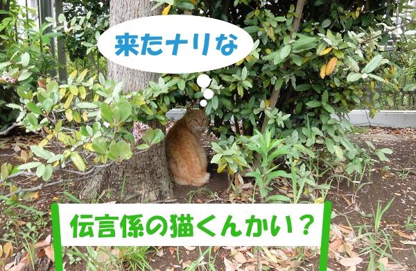来たナリな「伝言係の猫くんかい?」