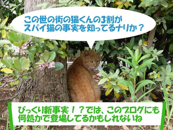 この世の街の猫くんの3割がスパイ猫の事実を知ってるナリか?「びっくり新事実!?では、このブログにも何処かで登場してるかもしれないね」