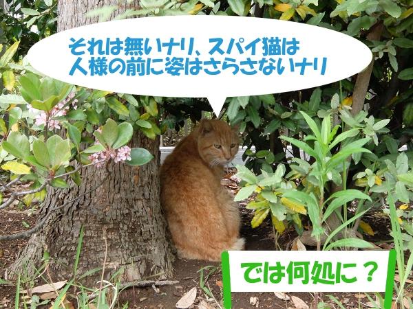 それは無いナリ、スパイ猫は人様の前に姿はさらさないナリ「では何処に?」