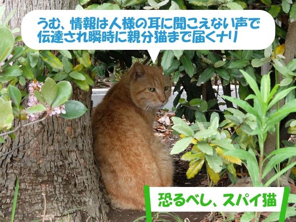 うむ、情報は人様の耳に聞こえない声で伝達され瞬時に親分猫まで届くナリ「恐るべし、スパイ猫」