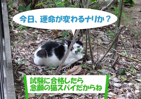 今日、運命が変わるナリか? 「試験に合格したら念願の猫スパイだからね」 border=
