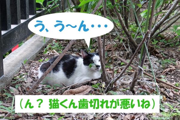 う、う~ん・・・ (ん? 猫くん歯切れが悪いね)