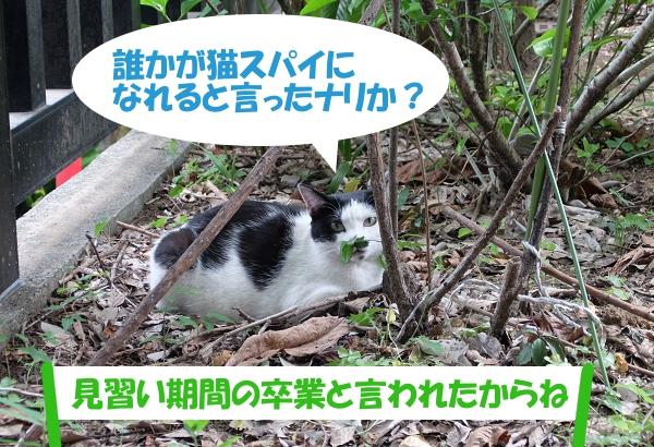 誰かが猫スパイになれると言ったナリか? 「見習い期間の卒業と言われたからね」