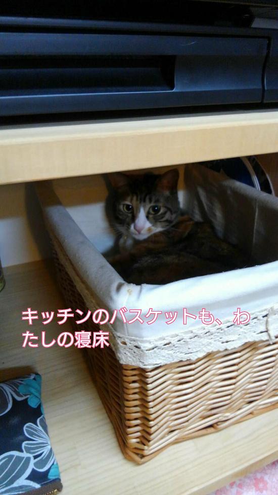 らん&きゃりー-34