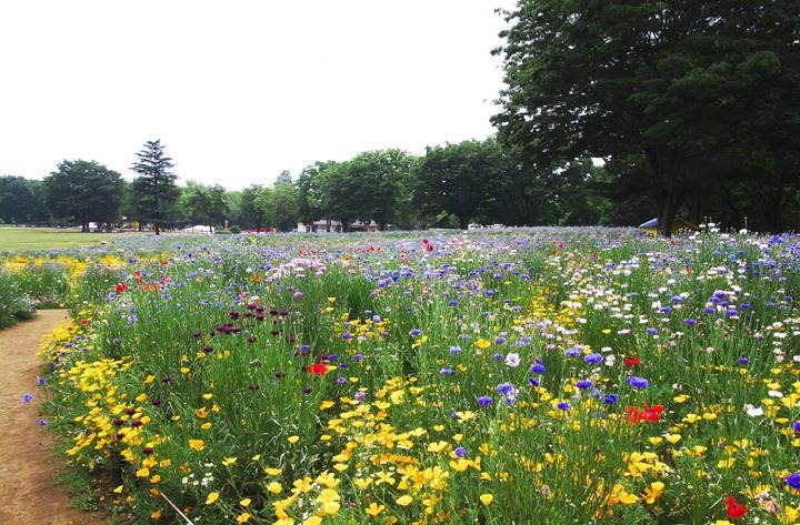 原っぱ西の花畑-790