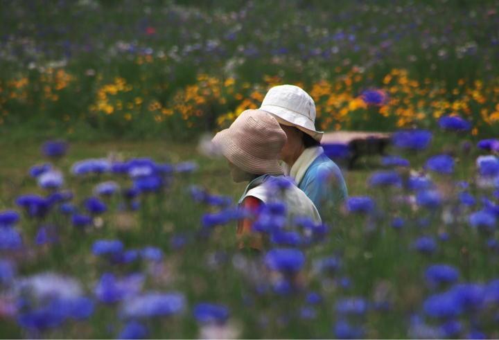 花の中で-807