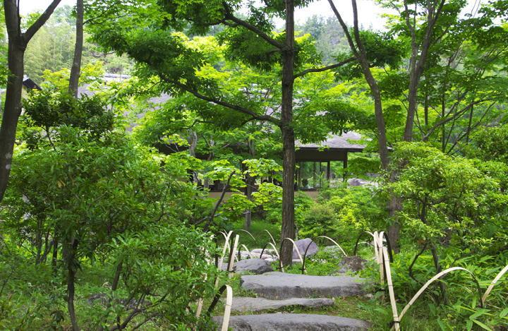 日本庭園-822