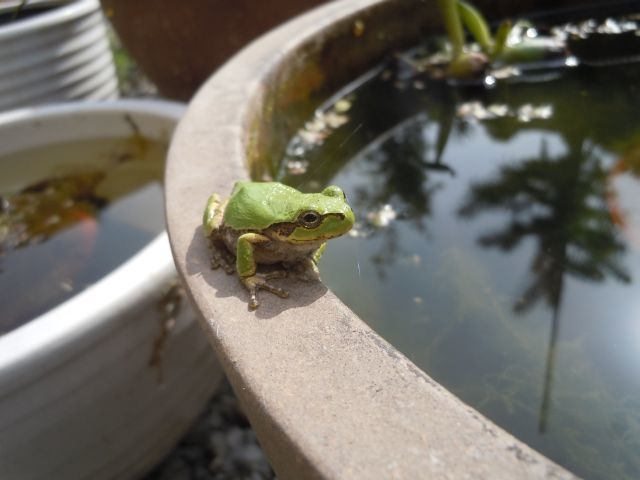Frog_7680.jpg